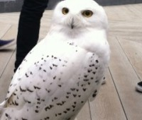 One of the birds on show at the falconry display. Photo: Angeline McCall