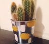 cactus in a painted pot